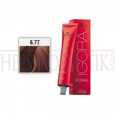 İgora Royal Saç Boyası 6.77 Yoğun Bakır Koyu Kumral 60 Ml